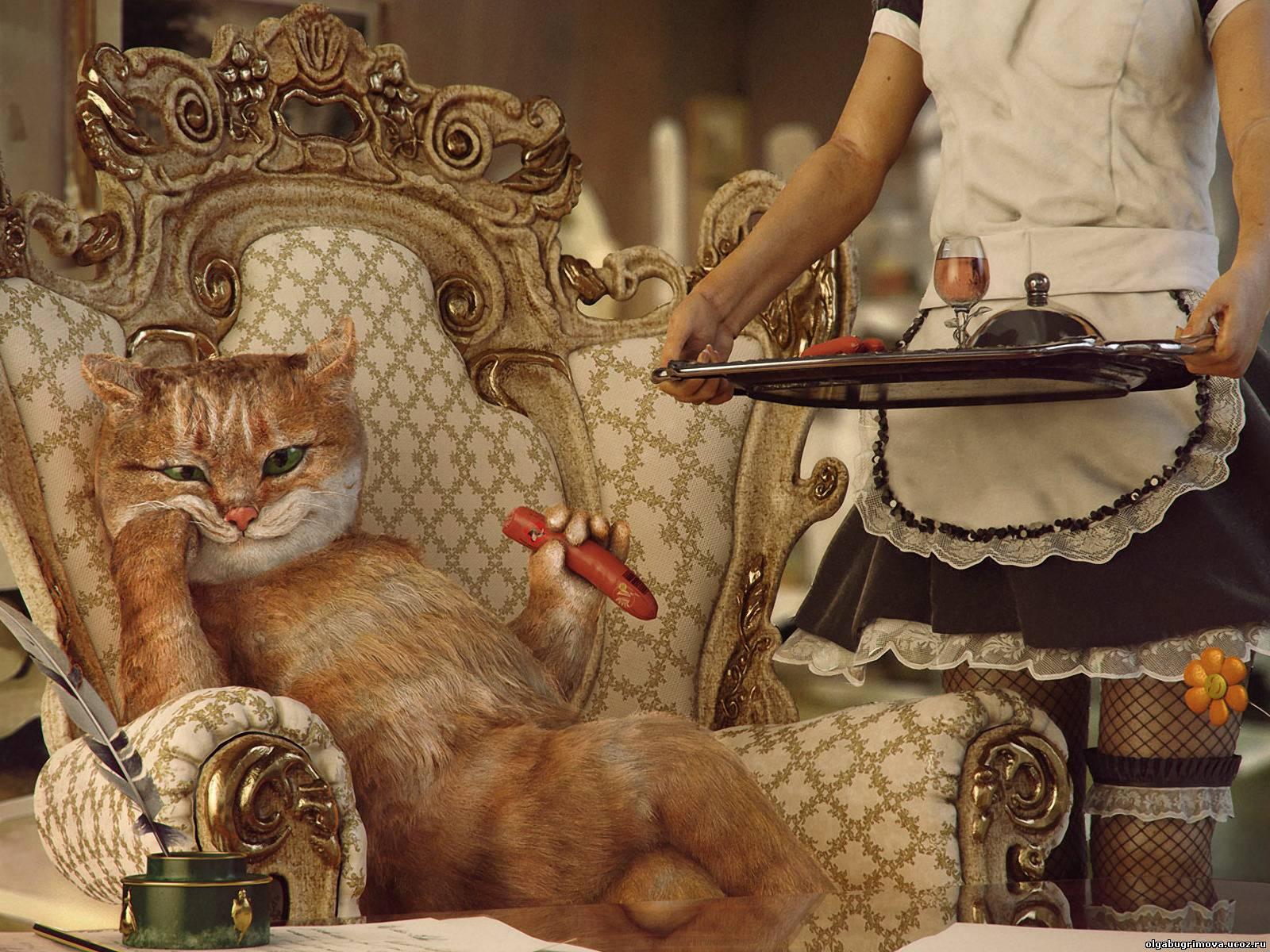 Фотки крутой кот - 81